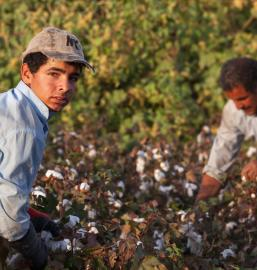 Seasonal child worker in cotton field, Turkey