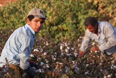 Seasonal child worker in cotton field, Turkey